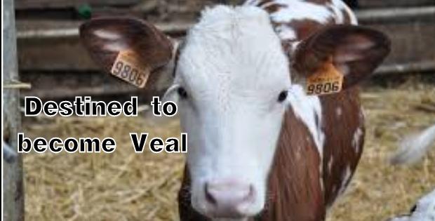 be vegetarian