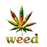 legal marijuana colorado