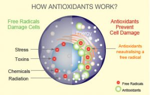 About Antioxidants